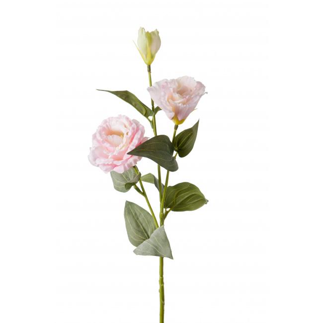 Kwiat eustoma różowa 65cm