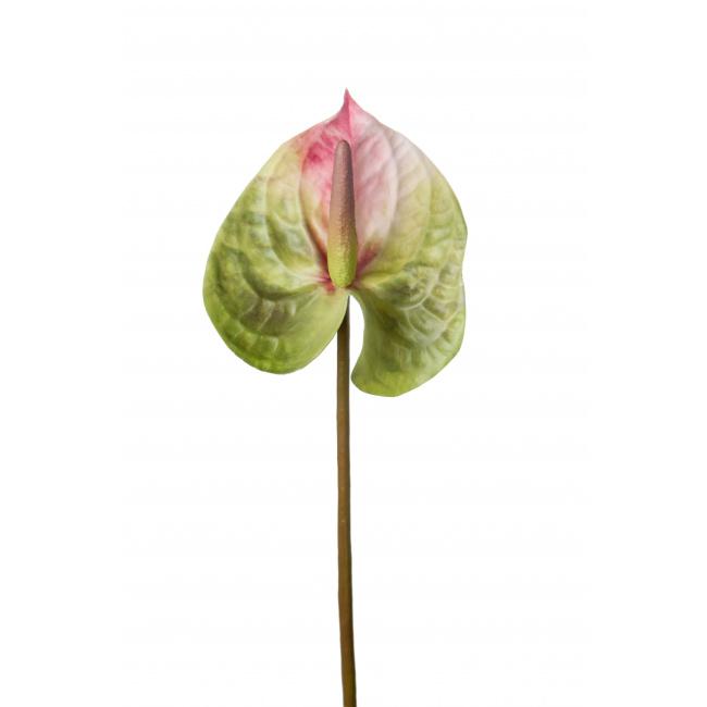 Kwiat anthurium zielono-różowy 25cm