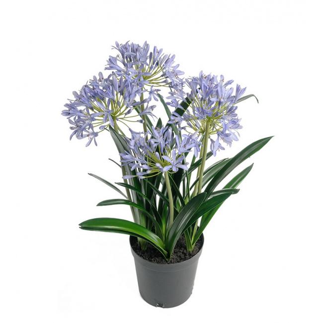 Kwiat Agapantus 70cm