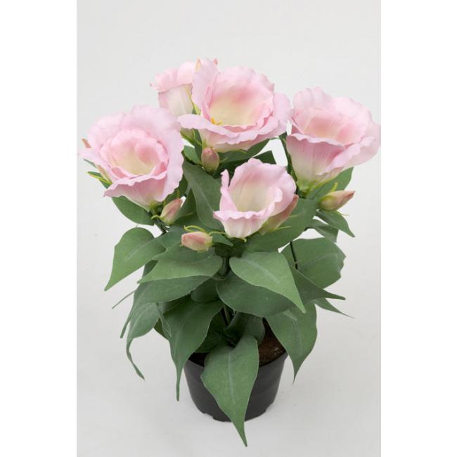 Kwiat eustoma różowa w doniczce 30cm