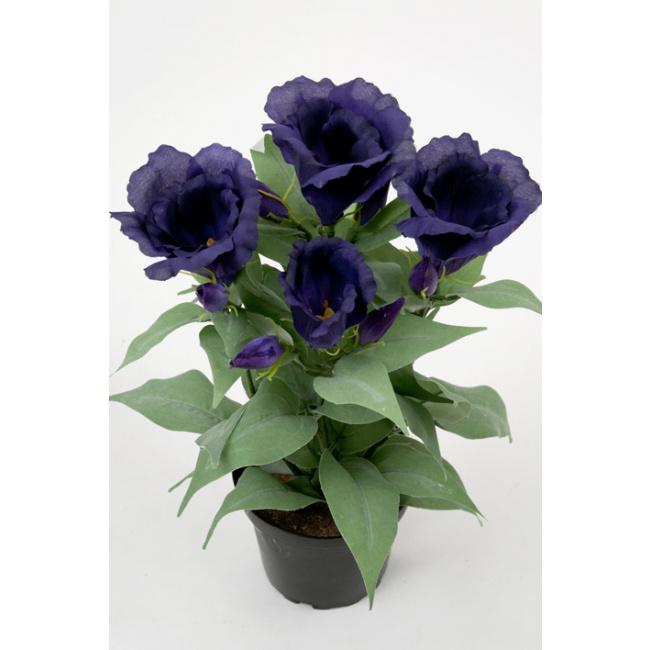 Kwiat eustoma w doniczce niebieska 30cm