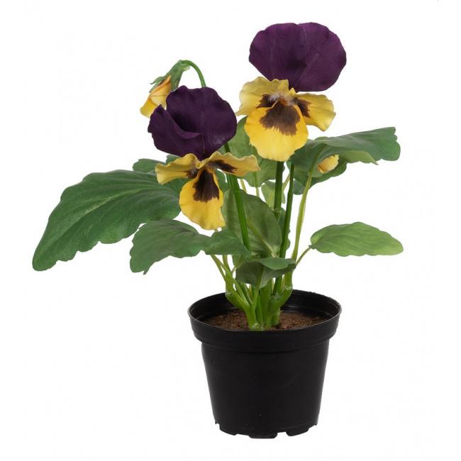 Kwiat Bratek 23cm