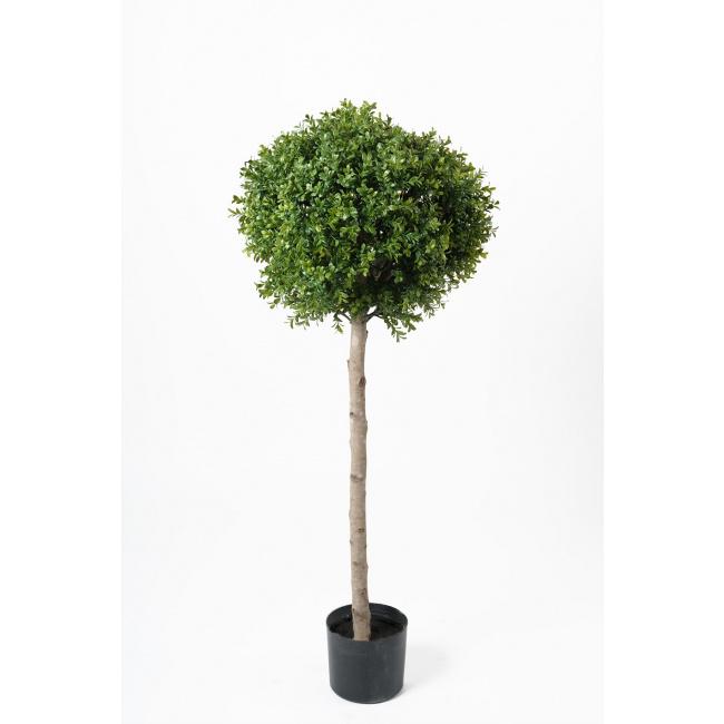 Drzewko bukszpan 115cm