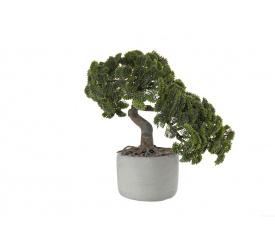 Drzewko Bonsai Cypus 24.5cm