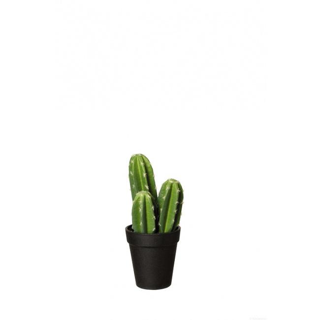 Kaktus 22cm