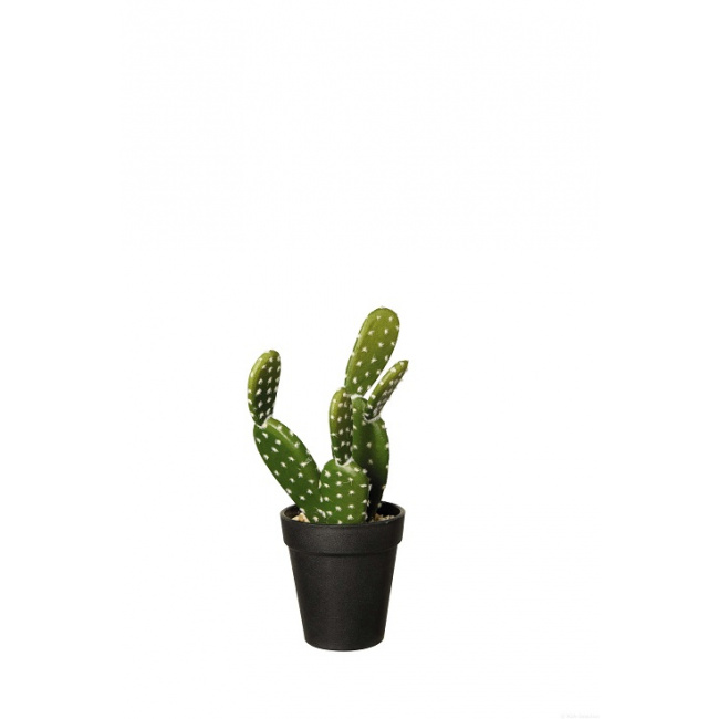 Kaktus 26cm Opuncja