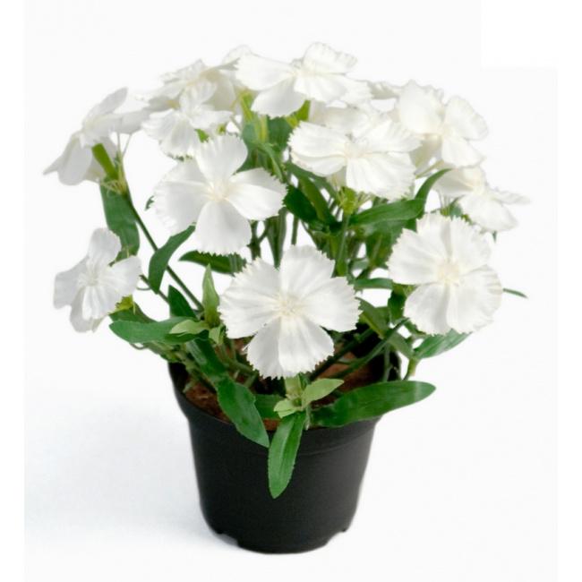 Kwiat Goździk 20cm