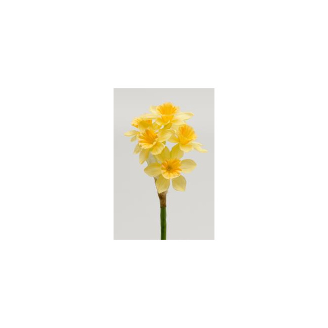 Kwiat narcyz 25cm