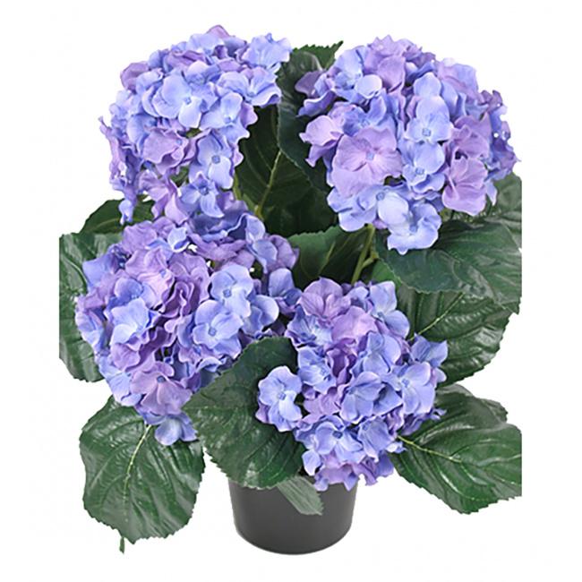 Hortensja w doniczce 37cm niebieska