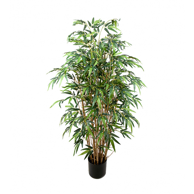 Bambus w doniczce 120cm