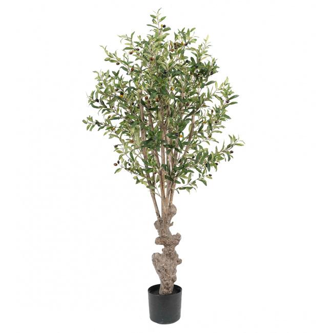 Drzewko oliwne 160cm